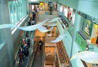 飛翔的羽翼 (1).jpg